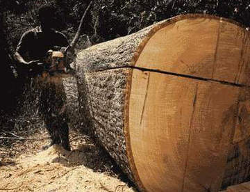 Виды распилов древесины
